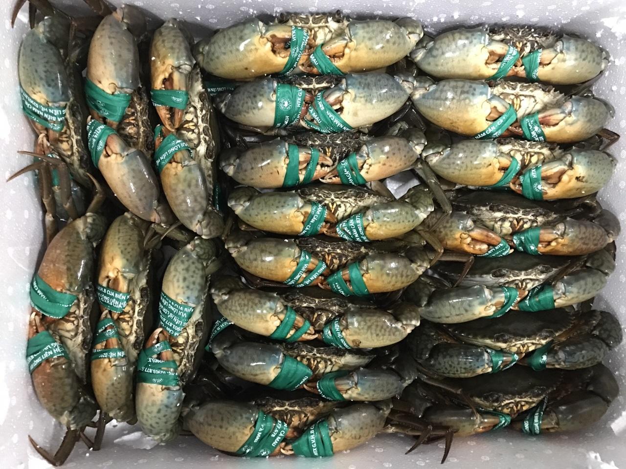 Cua Biển Cà Mau là một loài đặc sản tuyệt vời, quà tặng từ thiên nhiên mang đến cho con người. Cua Cà Mau được xem loại cua biển là ngon nhất nước. Thịt cua vừa thơm, vừa ngọt, không quá béo, bùi, chắc nịch. Còn gạch cua béo ngậy, ngây ngất đầu lưỡi.